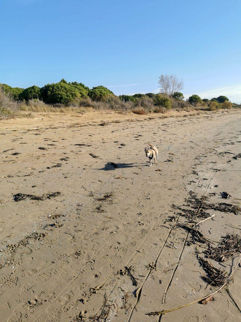 Hund in Italien am Strand