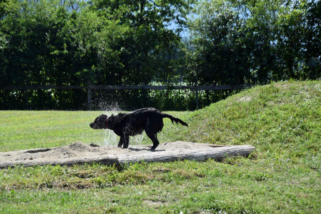 Hund in Sandkiste Camping mit Hund in Kärnten