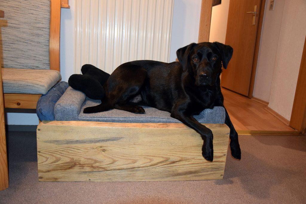 Hund in selbstgebautem Hundebett