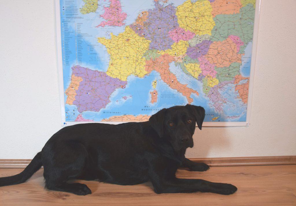 Hund liegt vor Europakarte