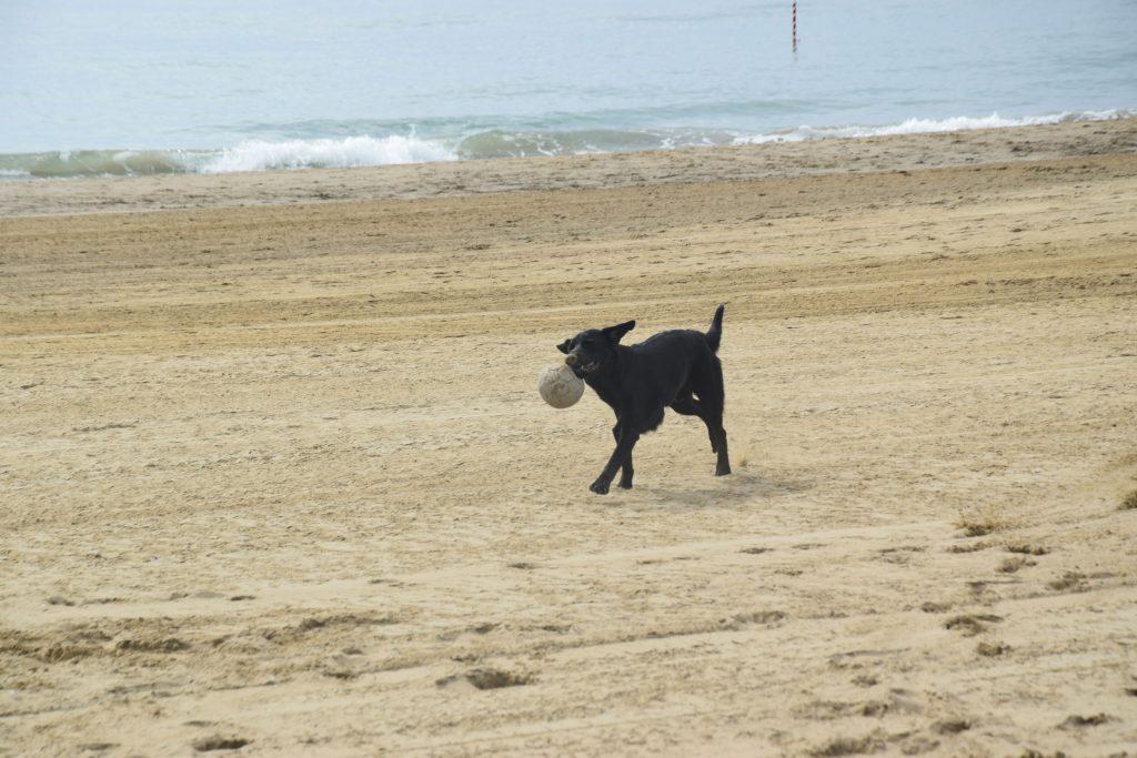 Hund mit Ball am Hundestrand Union Lido