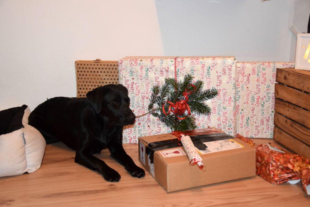 Hund mit Geschenken