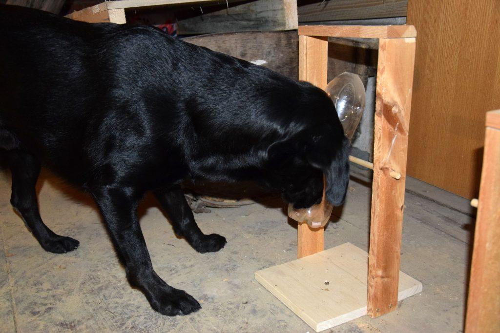 Hund mit Intelligenzspielzeug