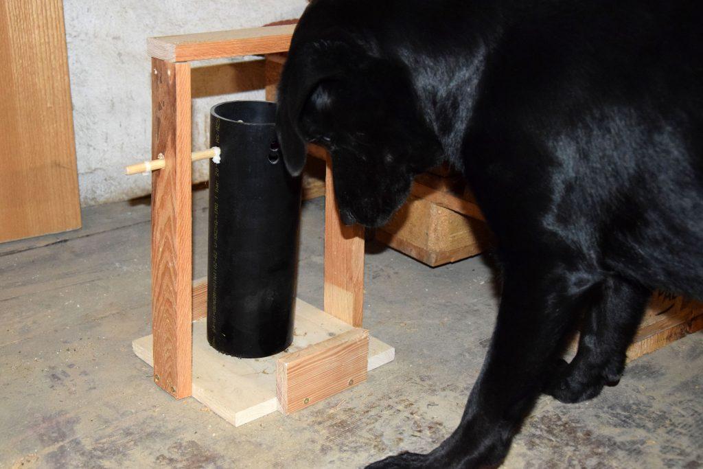 Hund mit Intelligenzspielzeug Rohr