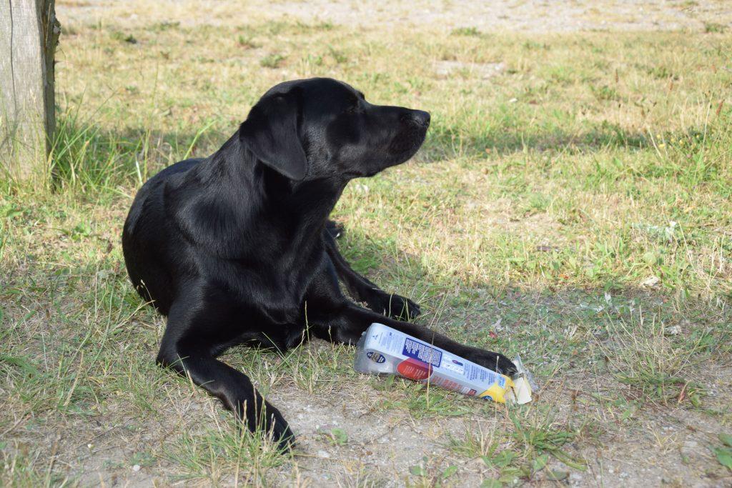 Hund mit Verpackung