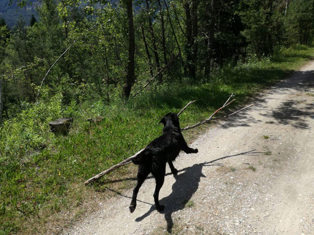 Hund mit Stöckchen Camping mit Hund in Kärnten