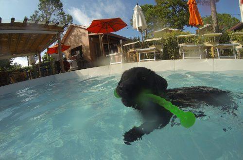 Hund schwimmt mit Hundespielzeug in Hundepool