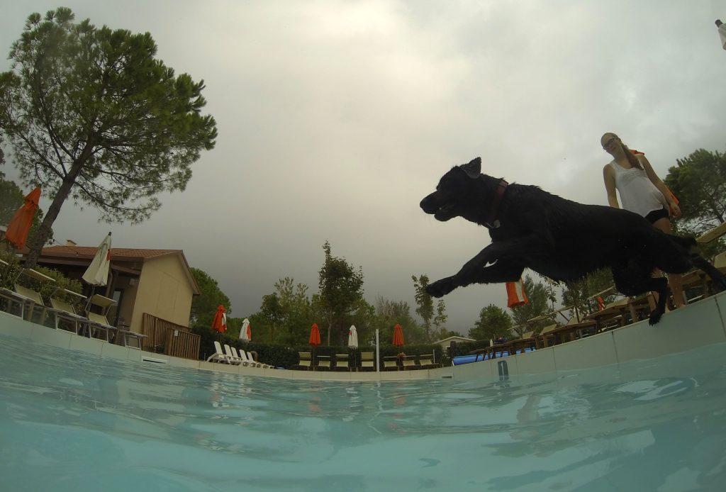 Hund springt in Hundepool Dog Camp Union Lido