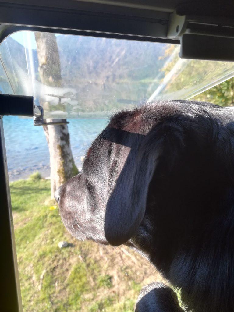 Hund vor Campingbusfenster