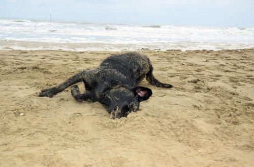 Hund wälzt sich in Sand Hundestrand