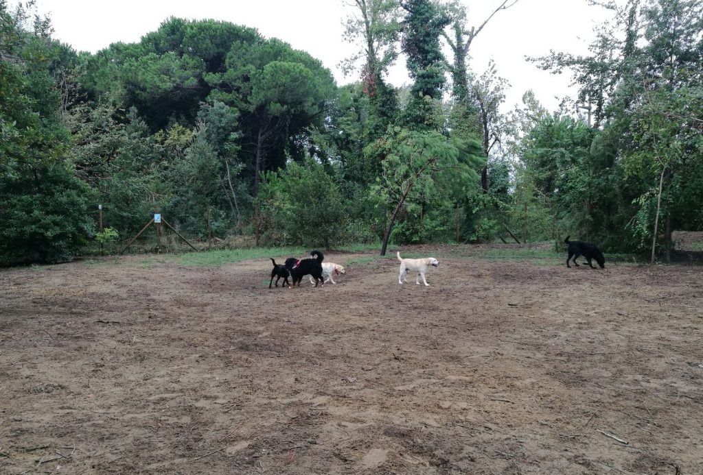 Hunde Dog Camp Union Lido