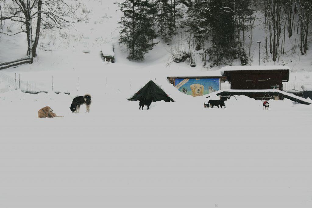 Hunde am Hundespielplatz