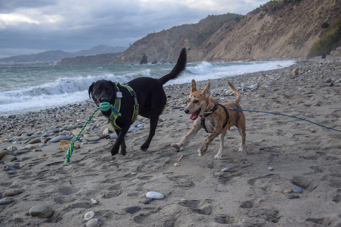 Hunde am Strand in Spanien