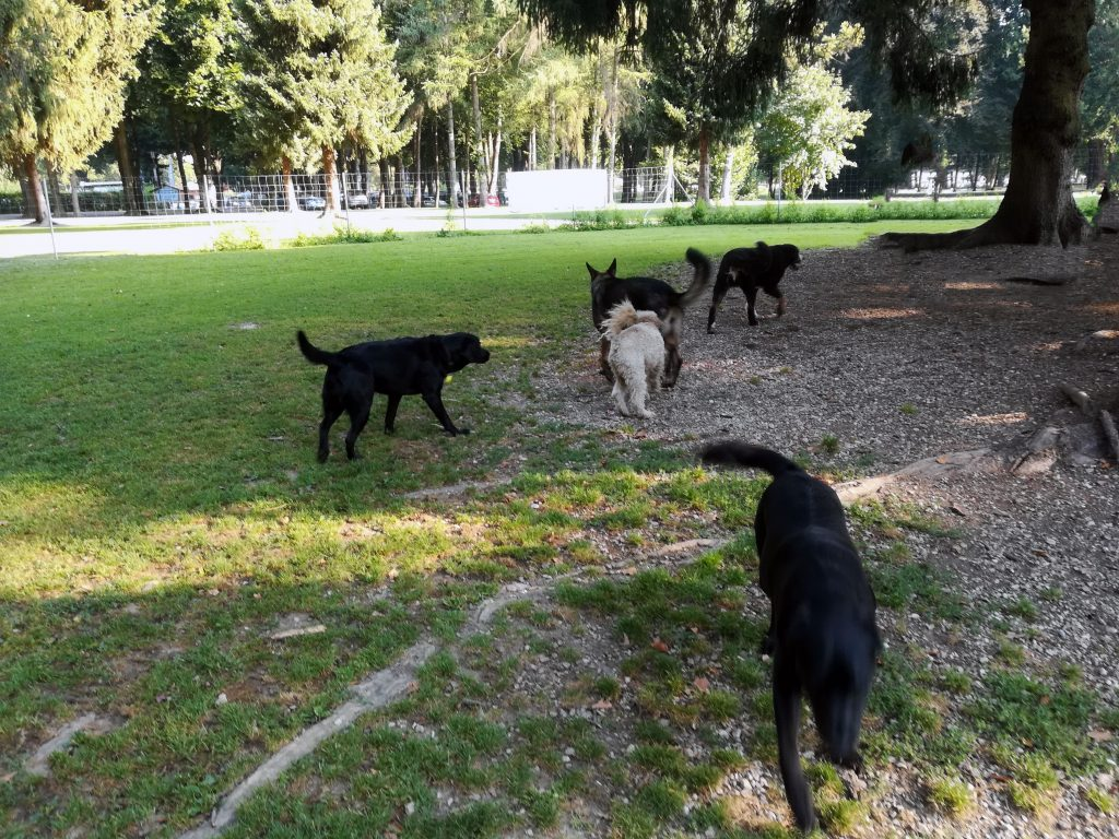 Hunde auf Hundespielwiese Waging am See
