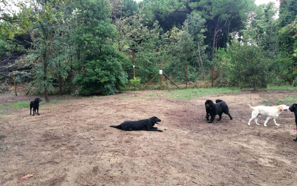 Hunde im Dog Camp Union Lido