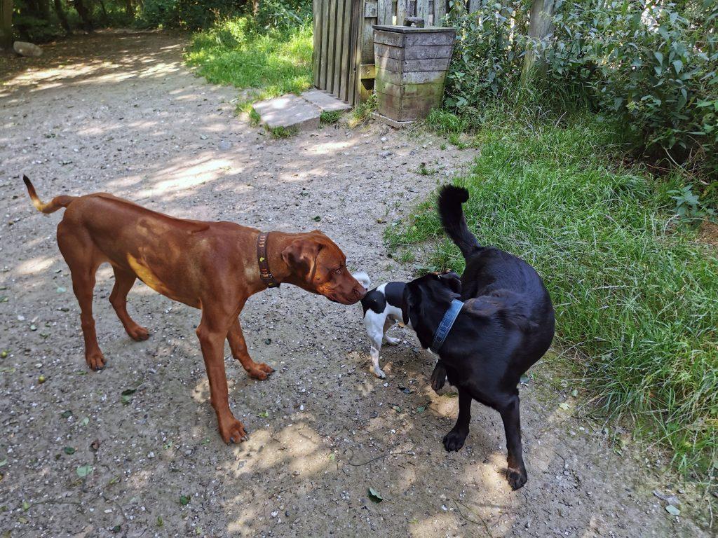 Hunde im Hundewald Scharbeutz