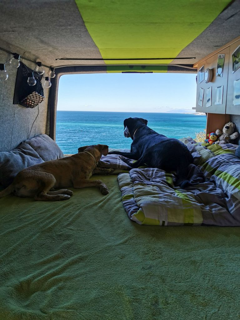 Hunde im Van