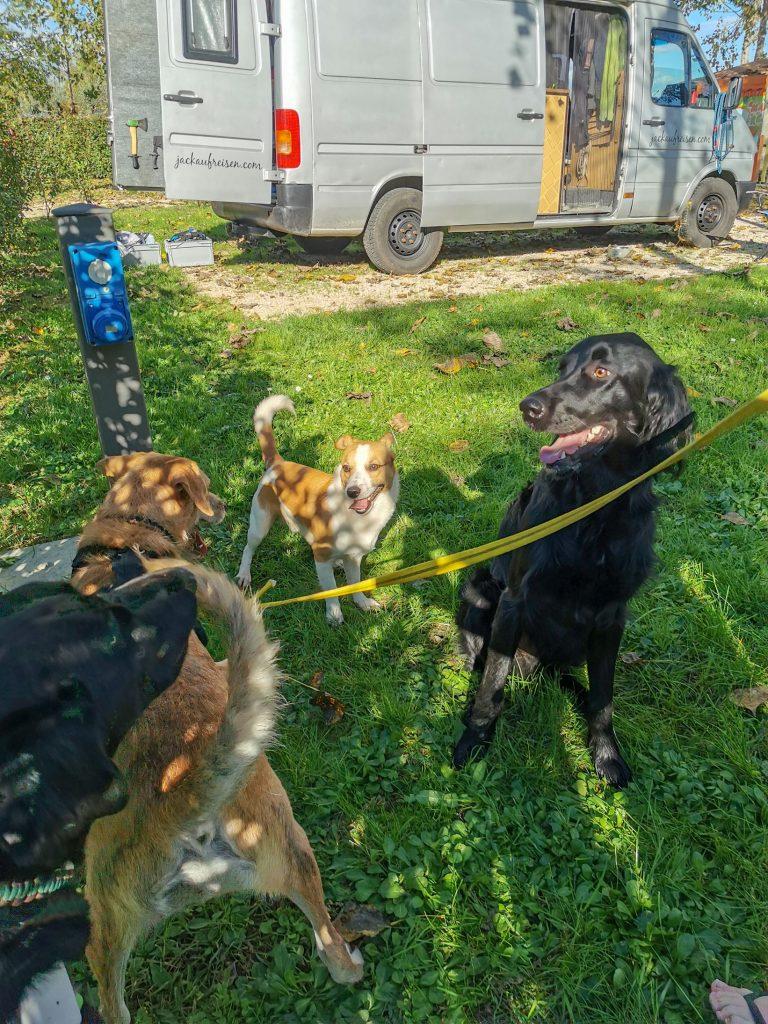 Hunde in Italien
