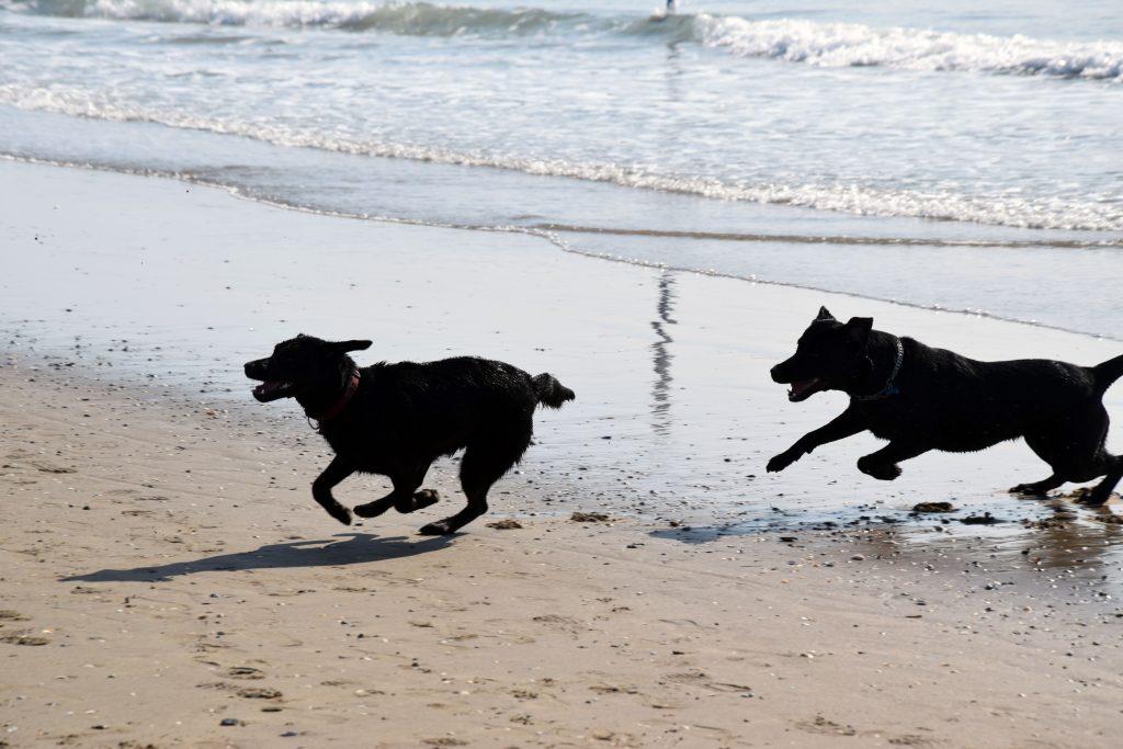 Hunde spielen am Hundestrand Union Lido