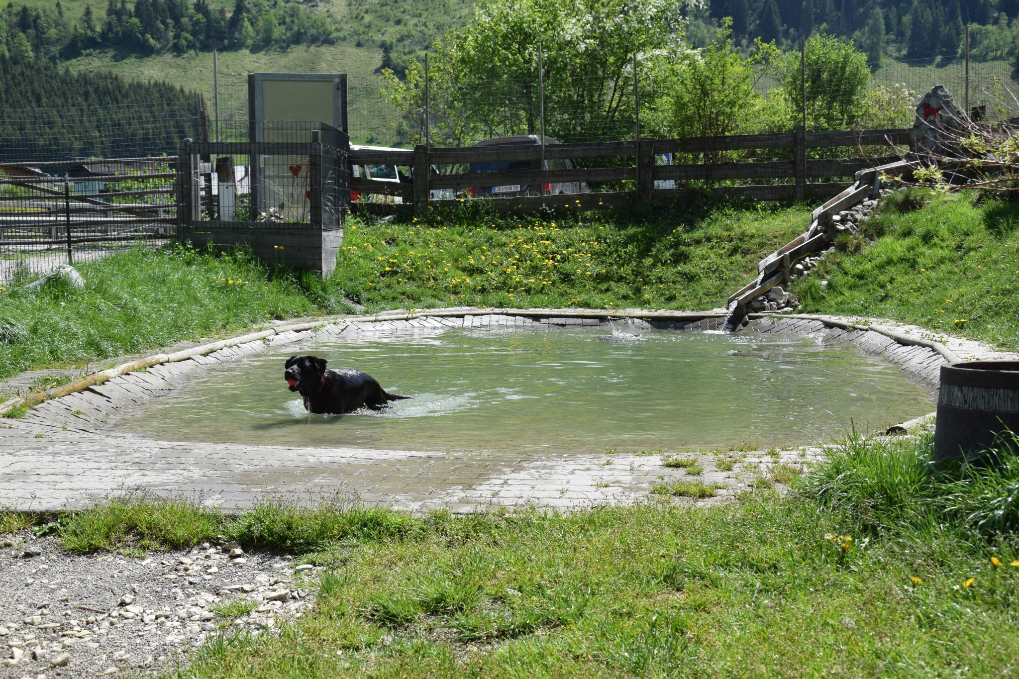Hundebadeteich Hundehotel Grimming