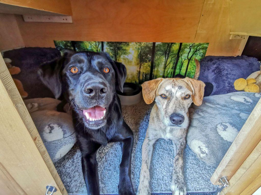 Hundebox für zwei Hunde im Van