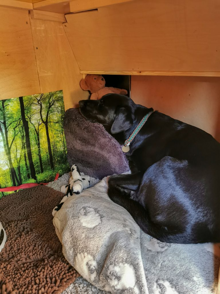 Hundebox im Van