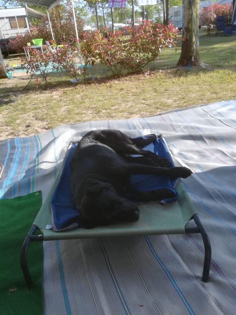 Hundeliege Dog Camp Union Lido