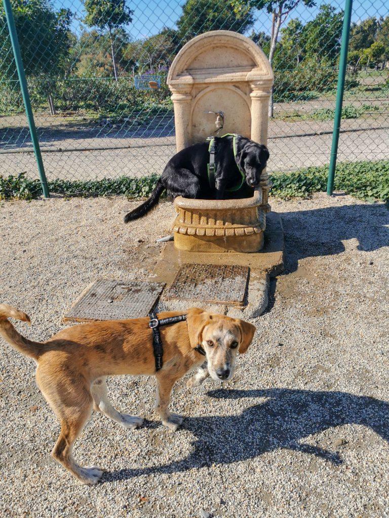 Hundepark in Almeria