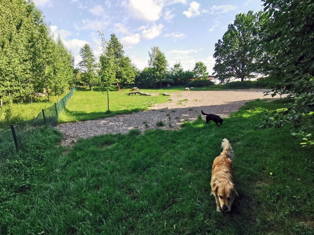 Hundepark in Schweden