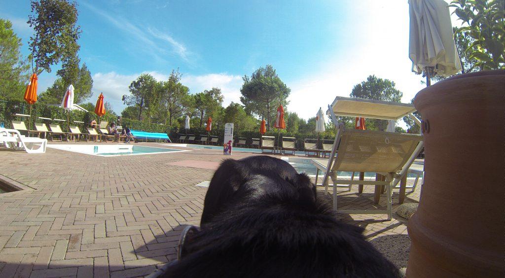 Hundepool Dog Camp Union Lido