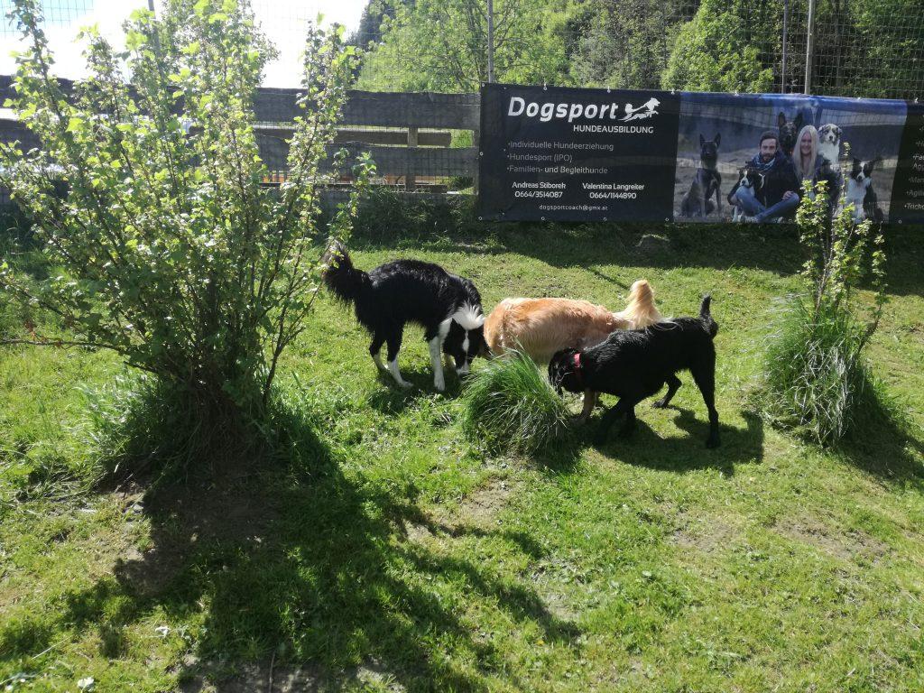 Hundespielplatz Hundehotel Grimming