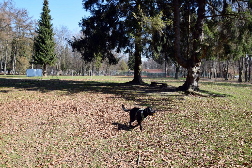 Hundespielplatz Waging am See