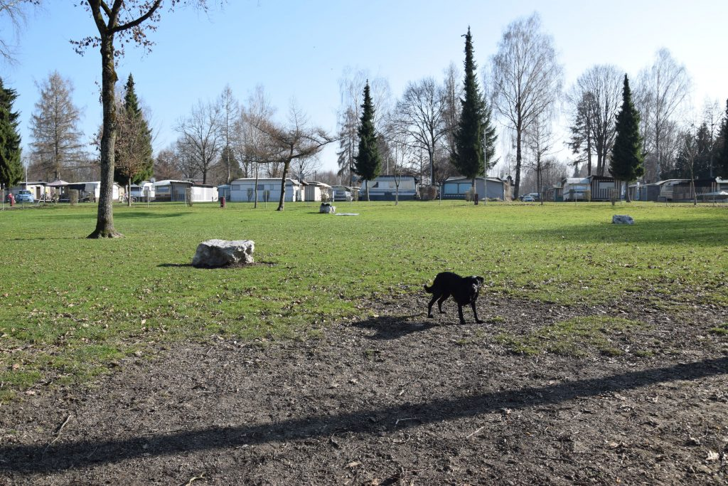 Hundespielwiese Waging am See Camping