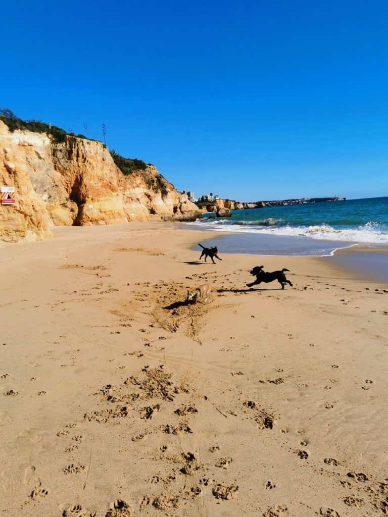 Hundestrand Algarve