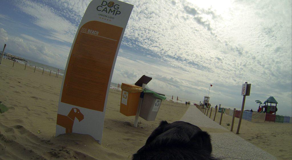 Hundestrand Dog Camp Union Lido Hundesicht