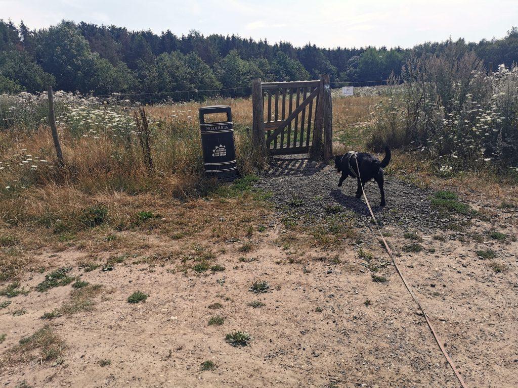 Hundewald Dänemark