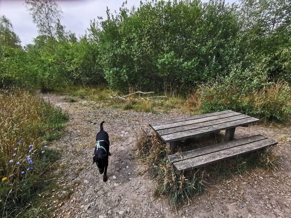 Hundewald in Dänemark
