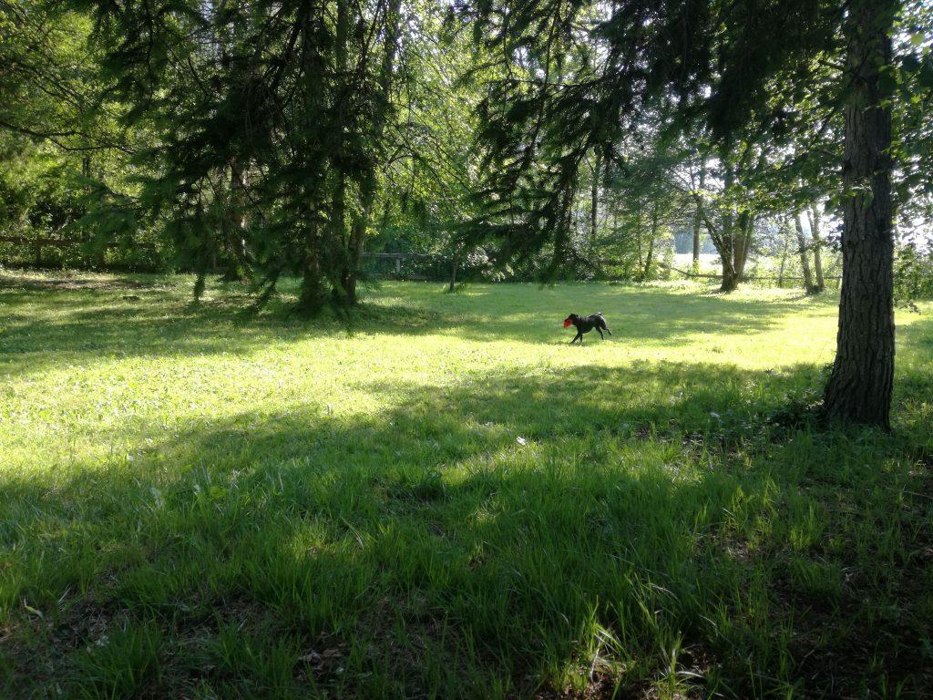 Hundewiese Camping Rosental Roz