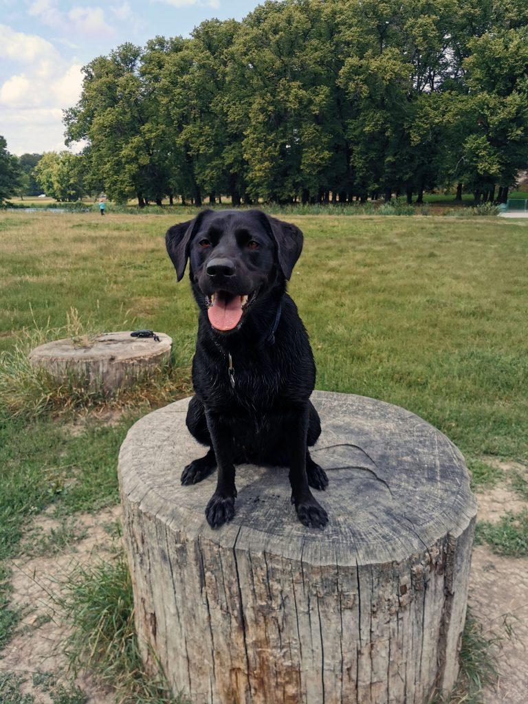 Hundewiese Drottningholm