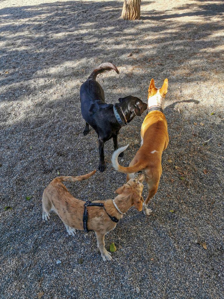 Hundewiese Malaga