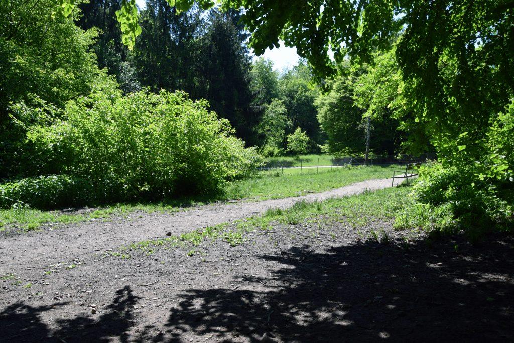 Hundewiese Salzburg Hans-Donnenberg-Park