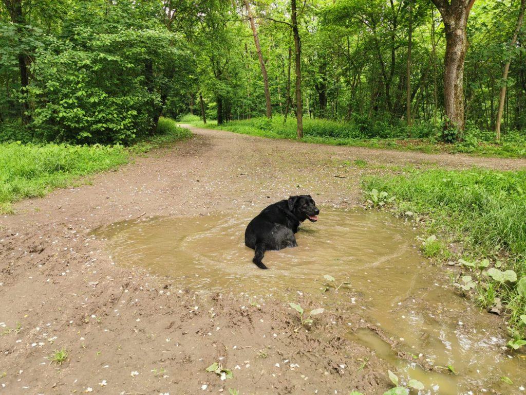 Hundewiese Wasserwald Linz