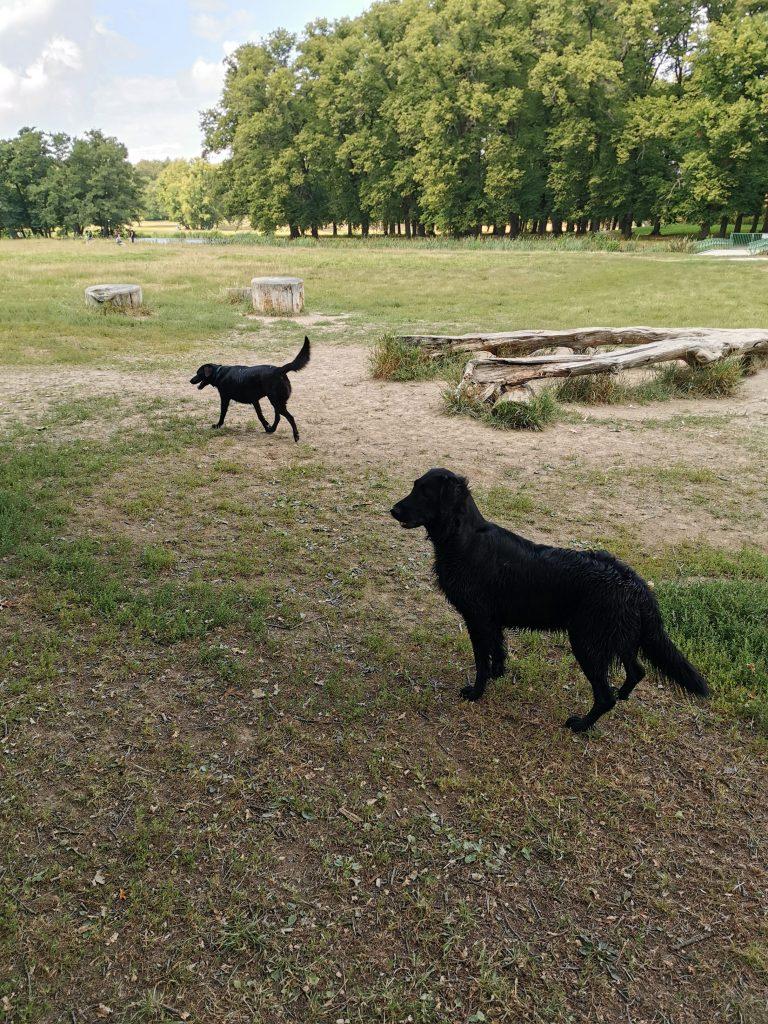 Hundewiese in Stockholm