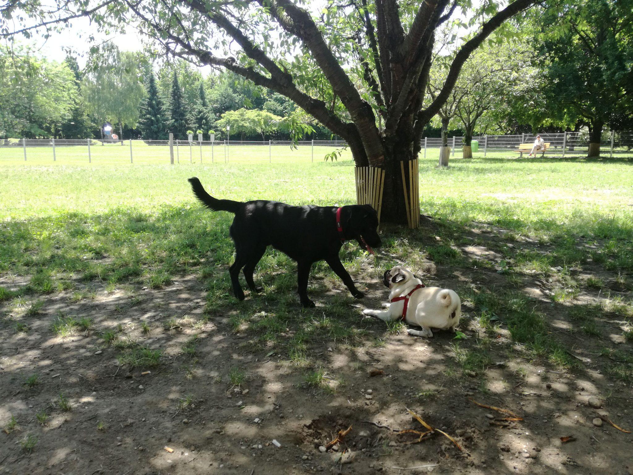 Hunde auf der Hundewiese Panuliwiese Linz