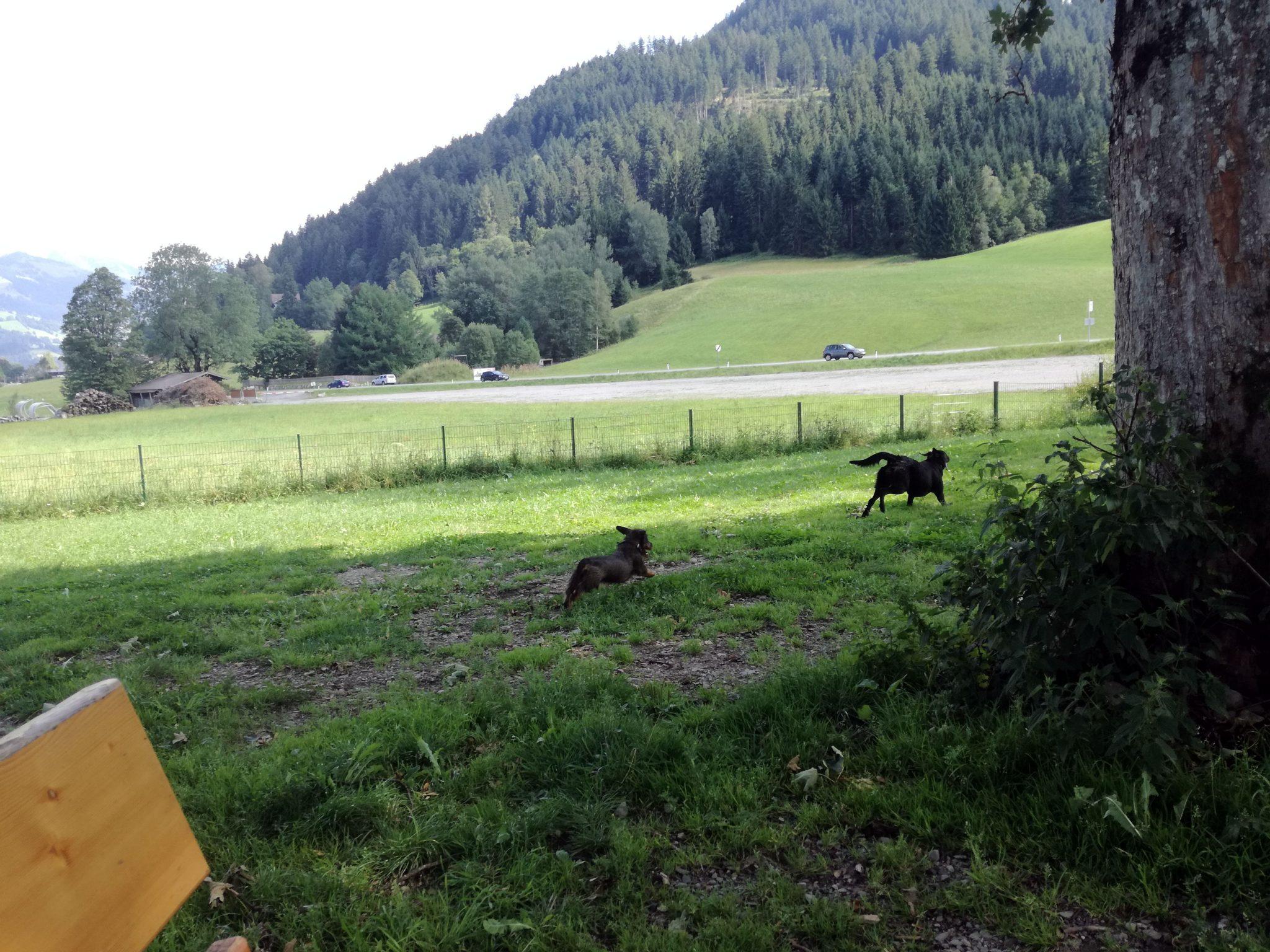 Spielen auf der Hundewiese Kitzbühel