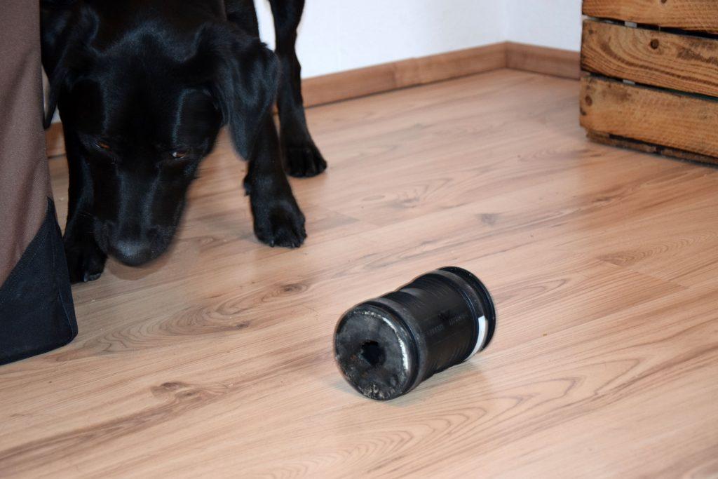 Intelligenzspielzeug Rolle Hund