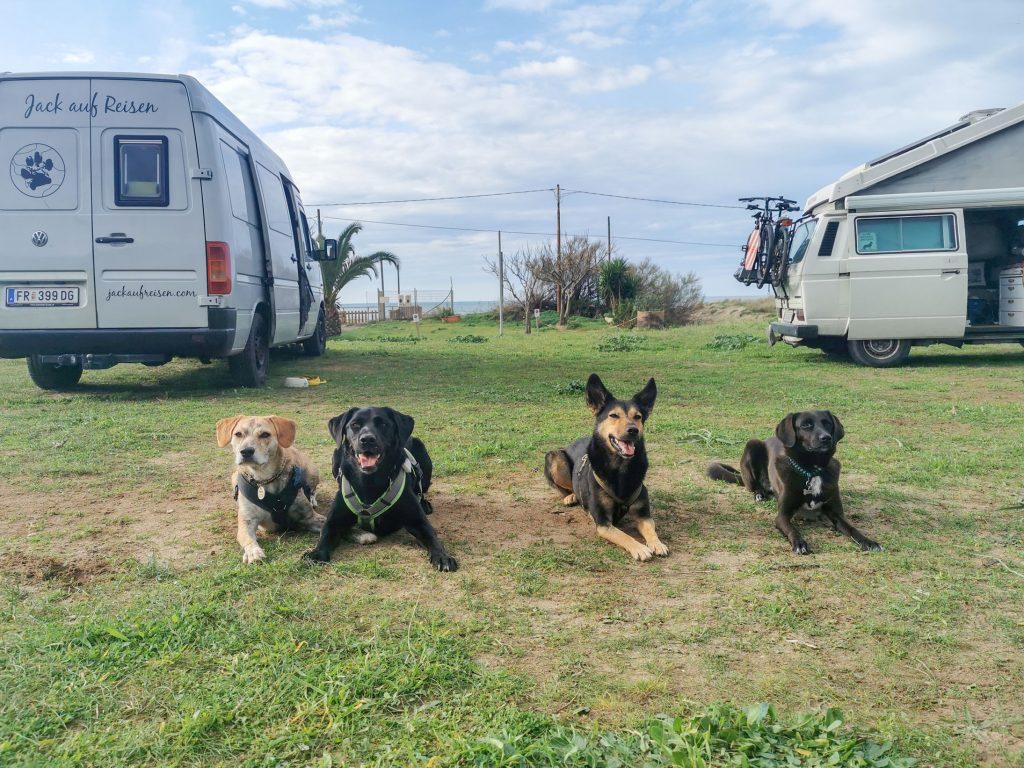 Italien-Reise mit Hunden