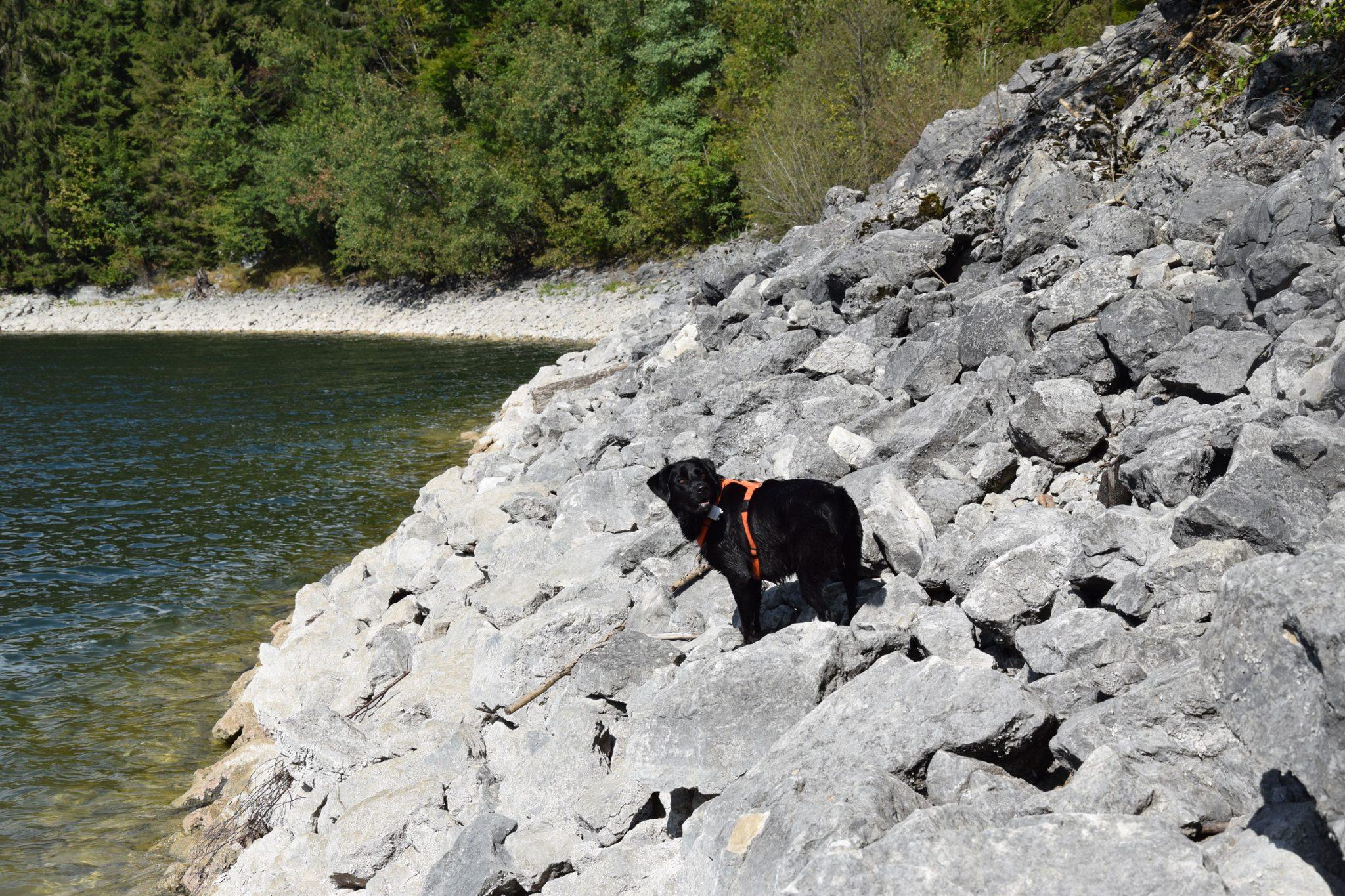 Jack-auf-den Felsen