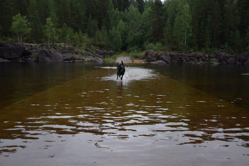Jack im Wasser in Schweden