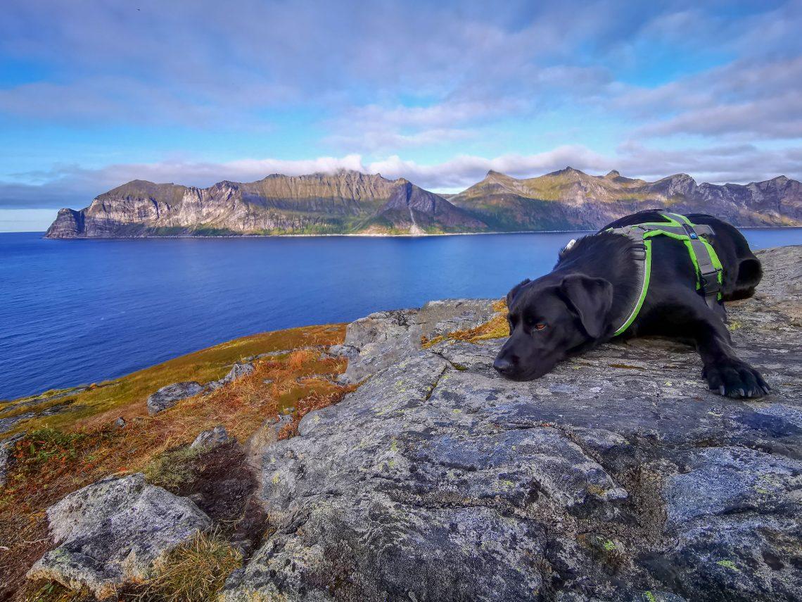 Landschaft Senja mit Hund